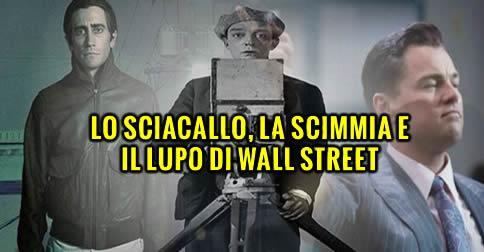 sciacallo1